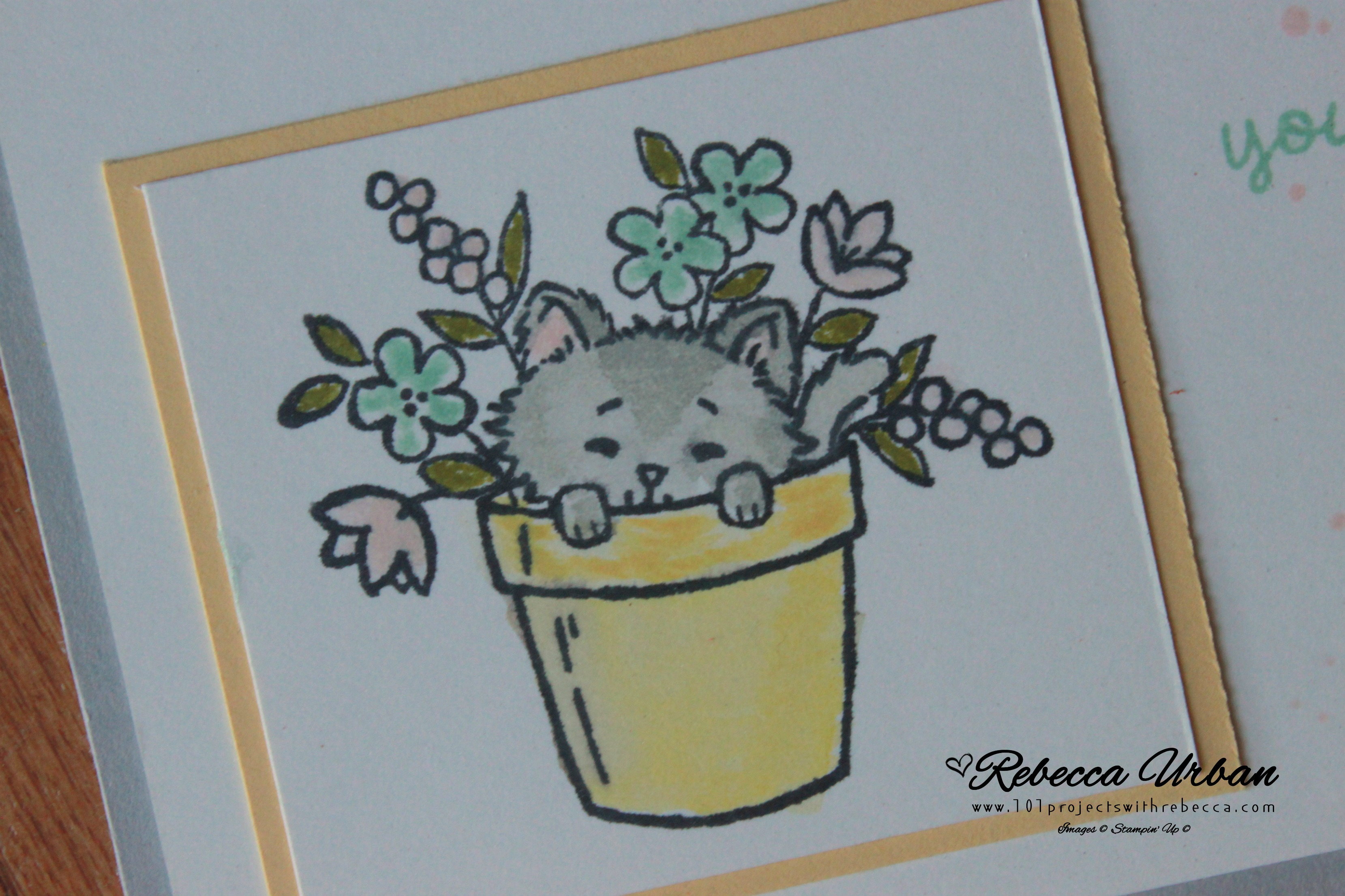 Stampin' Up! Pretty Kitty, Stampin' Up! Note card